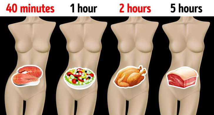 Combien de temps différents aliments mettent à être digérés et pourquoi il est important de le savoir