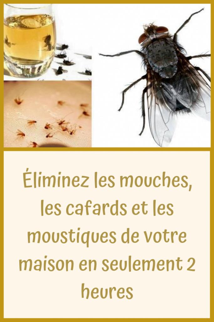 Éliminez les mouches, les cafards et les moustiques de votre maison en seulement 2 heures